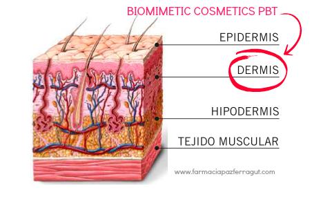 Imagen epidermis-dermis